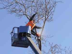 Tree surgeon Hale and Tree removal services