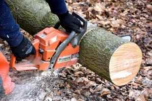 tree surgeons manchester, cheshire and stockport